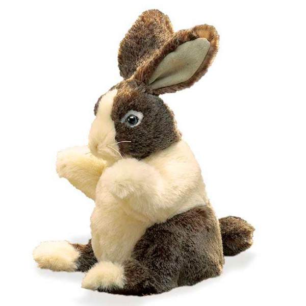 Baby Hase Dutch / Baby Dutch Rabbit