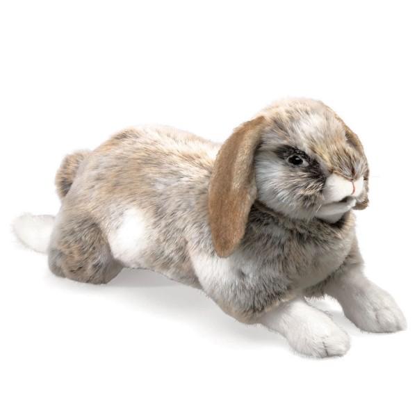 Hängeohr-Hase / Rabbit, Holland Lop