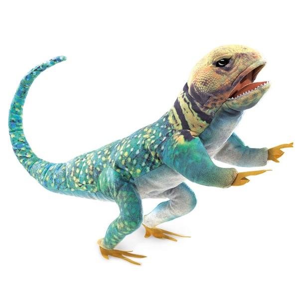 Halsbandleguan / Collared Lizard