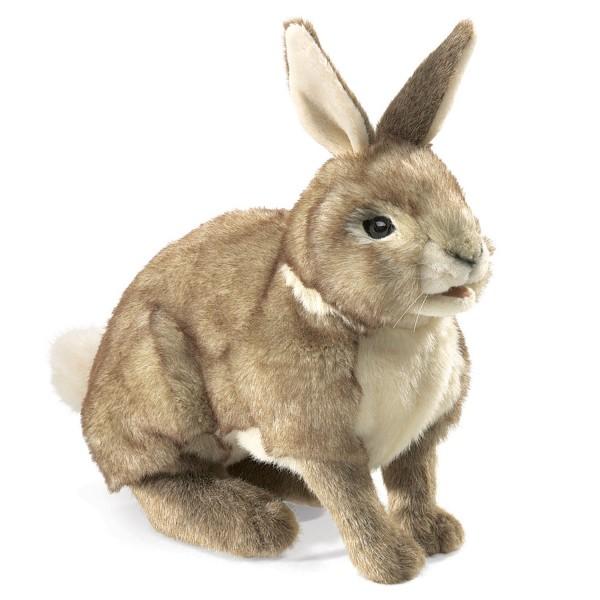 Baumwollschwanz-Kaninchen / Rabbit, Cottontail