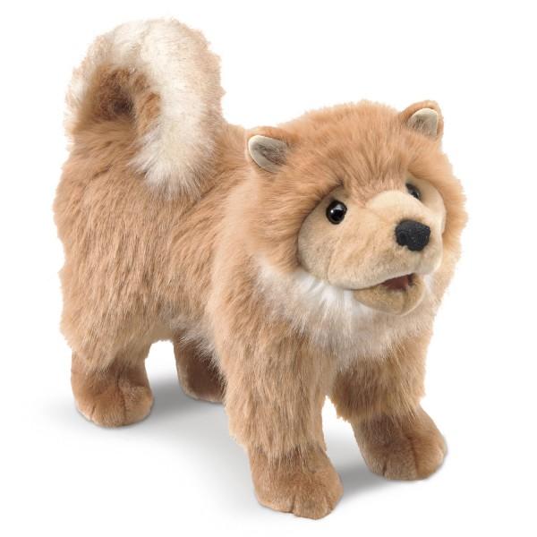 Zwergspitz /Pomeranian Puppy