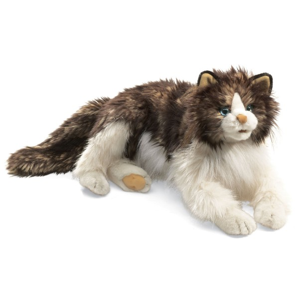 Wuschelige Katze / Ragdoll Cat