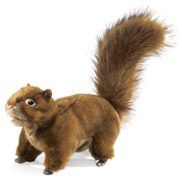 Eichhörnchen / Red Squirrel