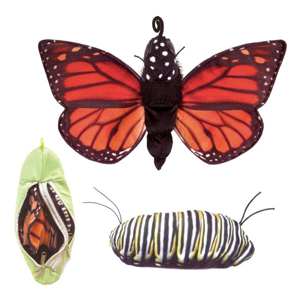 Metamorphose Schmetterling / Monarch Life Cycle - Metamorphose
